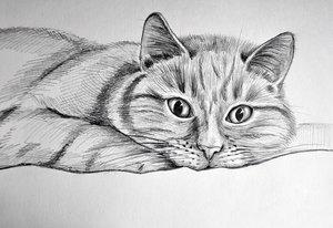 Мастер-класс по рисованию карандашом