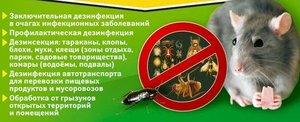 Поможем избавиться от грызунов и насекомых!