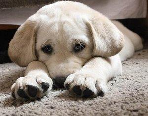 Виды клещей у собаки, симптомы и помощь питомцу