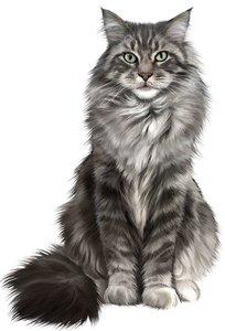 Случай из практики: Обратились с жалобами, кот отказывается от еды, отмечается слабость.