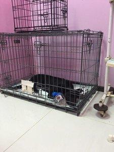 Уютная гостиница для животных в Туле - недорого!
