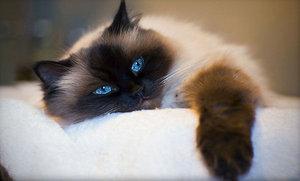 Ранняя стерилизация кошек и котов