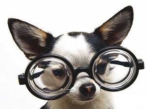 Болезни глаз у собак — как определить и где лечить?