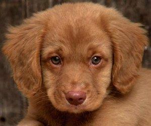 Лечение собак в Туле проводят надежные специалисты!