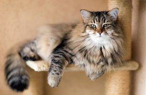 Акция на стерилизацию кошек и кастрацию котов!