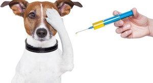 Прививки кошкам и собакам в Череповце