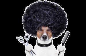 Стрижка собак в Вологде