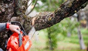 Услуги по кронированию и спилу старых деревьев в Вологде