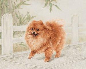 Случаи из практики: Собака породы шпиц 7 лет. Пришли с жалобами на хроническую хромоту на правую заднюю лапу.