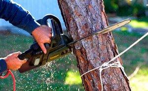 Спил деревьев в Вологде