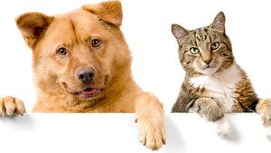 Эффективная и безопасная обработка от клещей собак и кошек