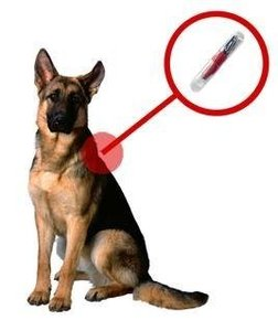 Чипирование животных - Ваш Друг теперь не потеряется!