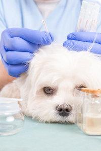 Физиотерапия животных в Туле - качественные ветеринарные услуги для Вашего питомца!