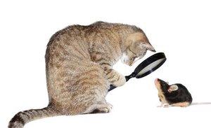 Офтальмология животных - свежий взгляд на лечение заболеваний глаз!