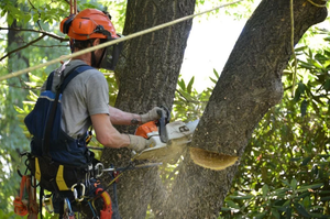 Услуги по спилу деревьев в Вологде