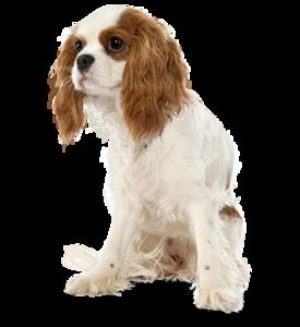 Где сделать прививку собаке в Череповце?
