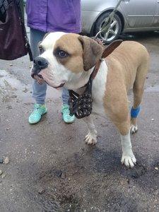 Случаи из практики: Собака поступила после ранения задних лап о металлический забор.