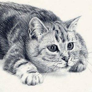 Случаи из практики: Обратились с котом с жалобами: отсутствие аппетита, рвота.