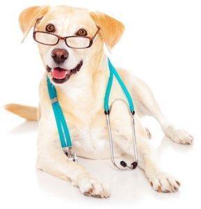 Профессиональная терапия животных в Туле