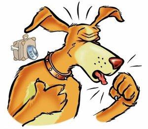 Кашель у собаки – причины, симптомы, лечение