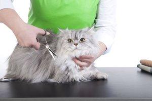 Стрижка котов в Вологде. С заботой о здоровье и красоте Вашего питомца!