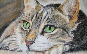 Случаи из практики: Кошка с жалобами на длительную хромоту на левую тазовую конечность.