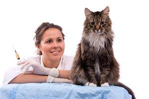 Любые прививки кошкам в Череповце