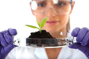Исследование анализа почвы в Великом Устюге