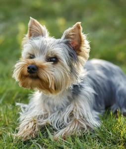 Случаи из практики: обратились с жалобами на сильную боль в области правого предплечья у собаки после прыжка