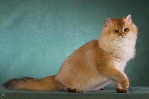 Боремся с комками шерсти в желудке кошки