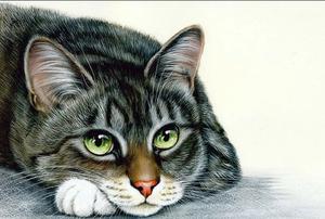 Случаи из практики: Кот 7-ми лет. Обратились в клинику с жалобой на опороспособность левой тазовой конечности.