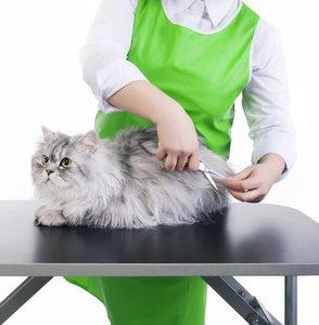 Санитарная стрижка кошек - профессиональный подход, здоровая шерсть!