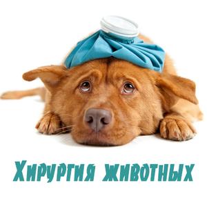 Хирургия для животных