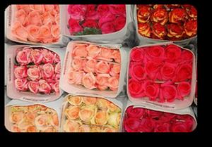Мечтаете поразить девушку охапкой роз? Роза от 30 рублей!