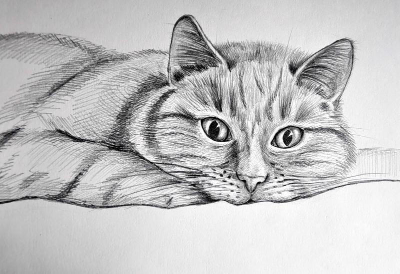 продаже красивые картинки котов простым карандашом мастер-класс посвятим