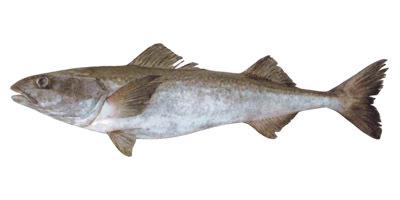 купить рыба оптом