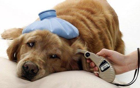терапия животных в туле