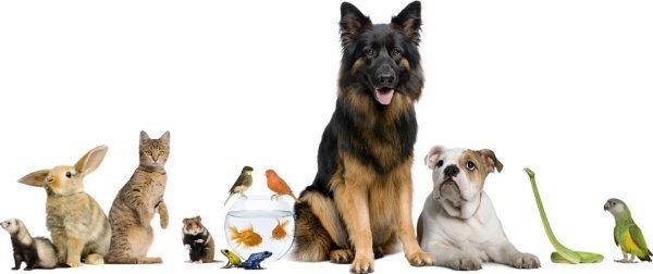 ветеринарная помощь круглосуточно в туле